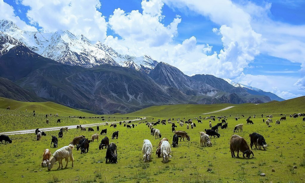 Chitral National Park - Photo By Tehseen A Shah